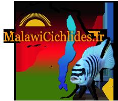 MalawiCichlides